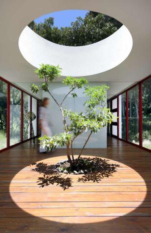 arbre intérieur et ouverture au plafond - chinkara house par Soliscolomer y asociados - guatemala