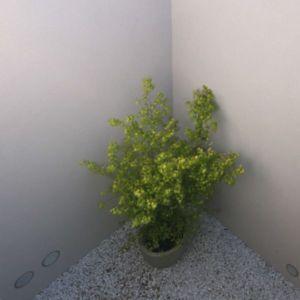 déco pot de fleurs - semi-ipogea-house par Dario Scanavacca - Marostica, Italie