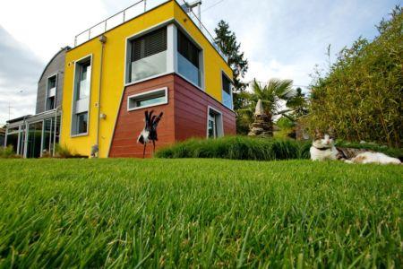 façade jardin et chat - Barbo House par Ralph Büeler (Bend Group) - Genève, Suisse
