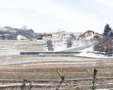 paysage cultivé viticole - Structure-Slope par Bergmeister Wolf Architekten - Bozen, Italie