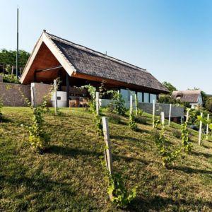 vignes - Villa du lac Balaton par FBI studio - Balatonfüred, Hongrie