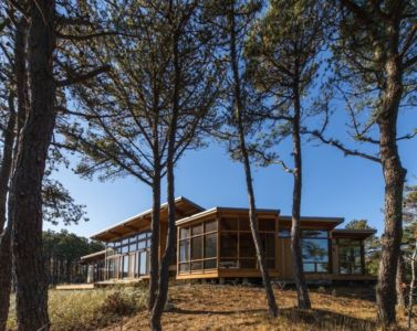 vue entre les arbres - Long Dune Residence par Hammer Architects - Truro, Usa