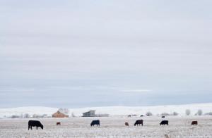 snow-fields-glass-farmhouse-in-northeast-oregon1