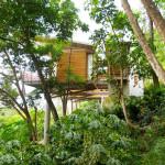 végetation côté maison - benjamin-garcia saxe - maison sur pilotis - costarica