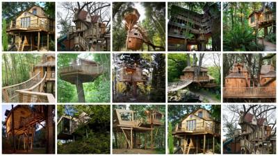 treehouses - cabanes dans les arbres