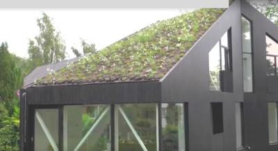 végétalisation toit incliné