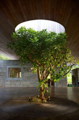 Mini jardin intérieur - Gota-Dam-Residence par Sforza Seilern - Afrique-Est